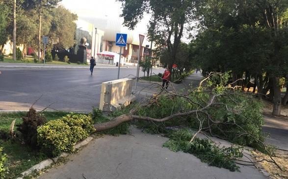 Bakıda güclü küləyin ilk fəsadı - Foto