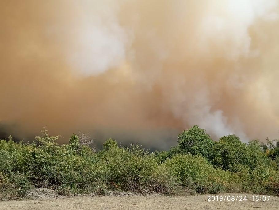 Soçidə 6 hektar meşəlik ərazi yanaraq kül oldu