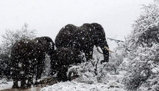 Африку завалило снегом