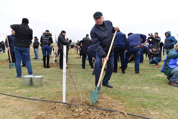 Стартовала акция по посадке 650 тысяч деревьев