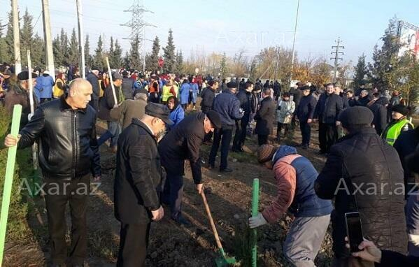 Tree planting campaign starts in Shamakhi