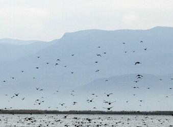 Bakı ərazisində quşların ölümü qeydə alındı – Xəbərdarlıq