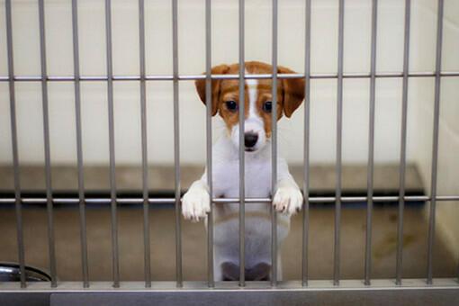 Крик о помощи: закрывается приют для кошек и собак – Фото