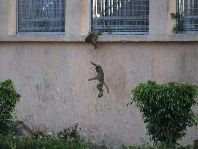 میمونلار پرزیدنت سارایینی محاصرهیه آلدی