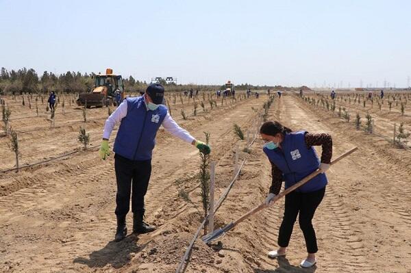 В рамках проекта «Зеленый марафон» посажены деревья