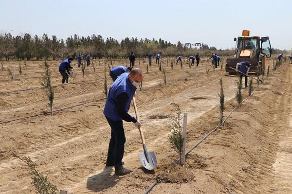 В Губадлы посажено около 750 деревьев