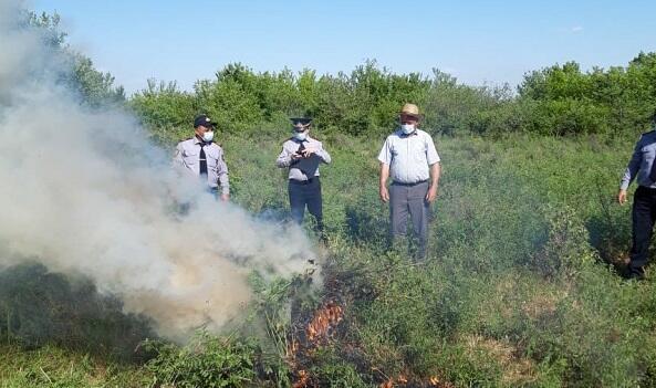2 hektar sahədə 1 ton narkotik bitki aşkarlandı