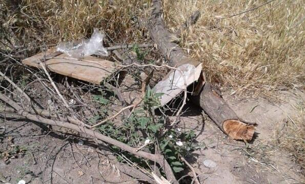Xırdalanda ağac qətliamı: sakinlər etiraz edir - Foto