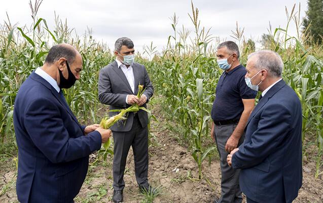Nazir meyvə bağlarında - Foto