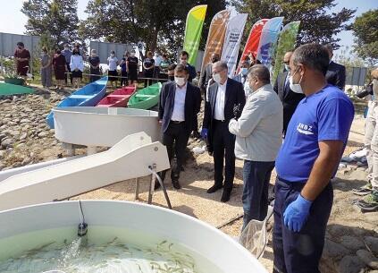 Kiçik Qızılağac körfəzinə balıqlar buraxıldı - Video