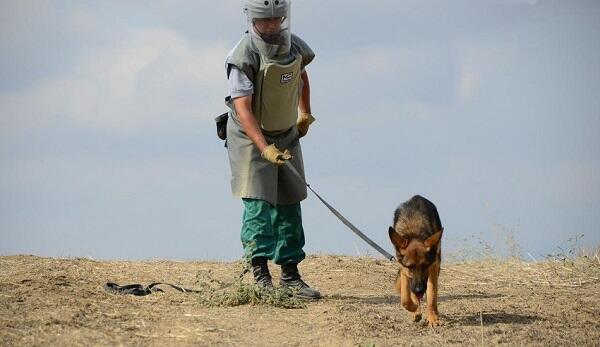 В Азербайджан доставлены 2 собаки-саперы