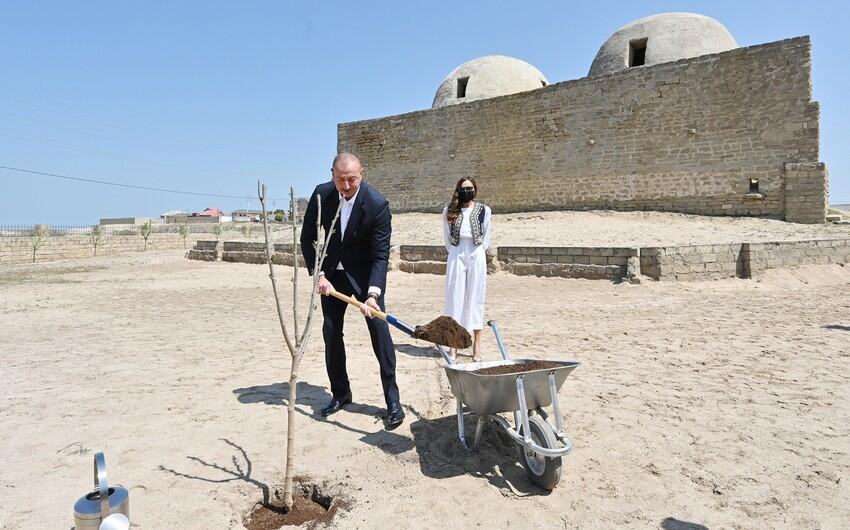 The President and I Lady planted a tree -